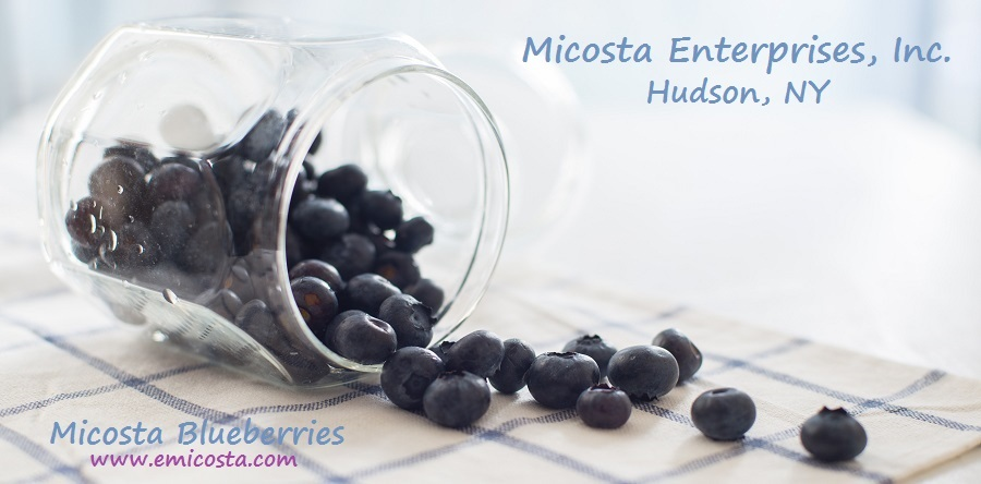 dried blueberry fruit